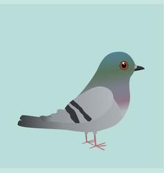 Cute pigeon cartoon vector