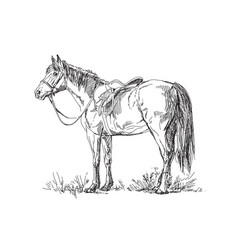 Horse with saddle and bridle vector