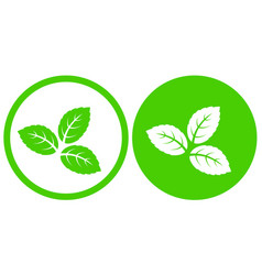 Natural eco green mint leaves symbol icon vector