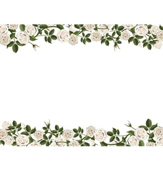 border of white roses vector image