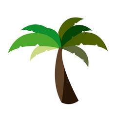 white background with palm tree and middle shadow vector image