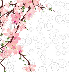 vector sakura branch on ornate background vector image vector image