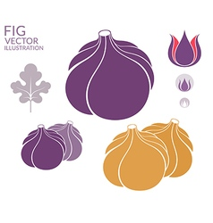 Fig Set vector image