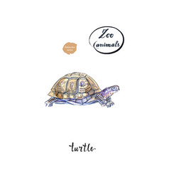Land turtle tortoise in watercolor vector