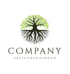 Oak tree logo design tree and root tree life vector