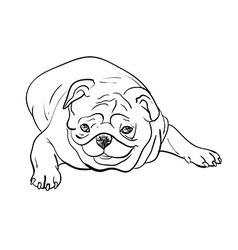 Drawing pug on white background vector image vector image