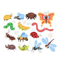beetles insects caterpillars worm ant spider vector image