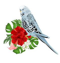 budgerigar home pet blue pet parakeet vector image