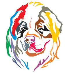 colorful decorative portrait of dog st bernard vector image