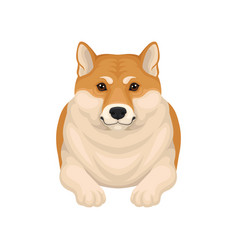 Detailed flat portrait of adorable shiba vector