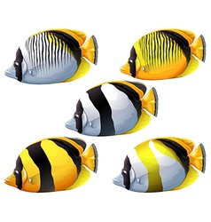 Five colourful fishes vector