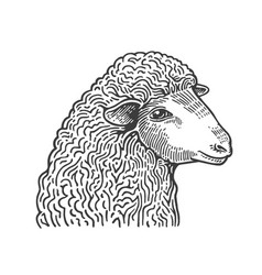 Head of sheep hand drawn in style of medieval vector