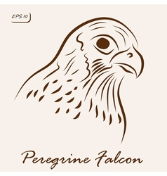Peregrine Falcon vector