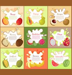 pitaya and mango fruity fruits vector image