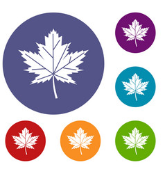 maple leaf icons set vector image vector image