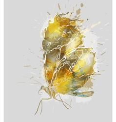 Gold splash butterfly vector