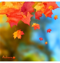 Autumn watercolor leaves on blurred photo vector image