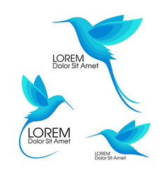 modern set blue birds colibri in flight trendy vector image