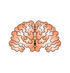 Picture of the brain drawn by hand vector