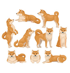 Set of cute shiba inu in different poses home pet vector