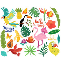 Summer icons with tropical birds and exotic vector