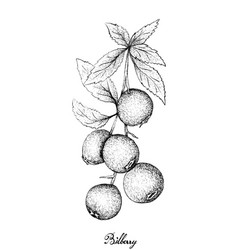 Hand drawn of ripe bilberries on white background vector