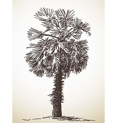 Palm tree sketch vector image vector image