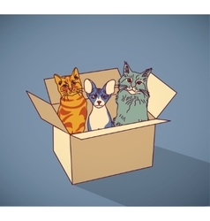 Sad homeless street pets cats in box color vector image