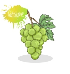 Green grape vector image vector image