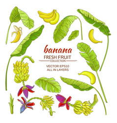 banana elements set vector image