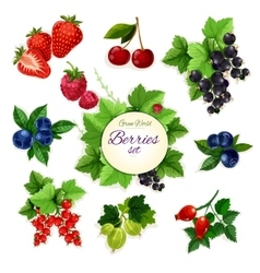 Berries Forest and garden isolated berry icon set vector