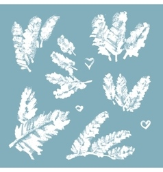 Collection of snow-covered pine branches vector