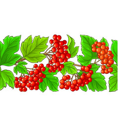 guelder rose pattern on white background vector image