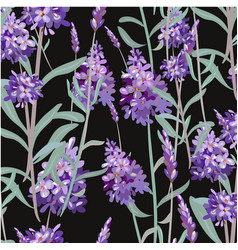 pattern with lavender hand painting vector image