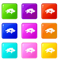 Sea bass fish icons 9 set vector