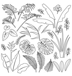 Tropical leaves and flowers outline set vector