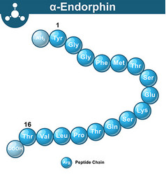 Alpha endorphin chemical structure vector image vector image