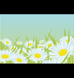 daisy flower field vector image