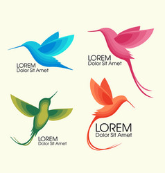 modern set colorful birds colibri in flight vector image