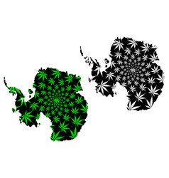 Antarctica continent - map is designed cannabis vector