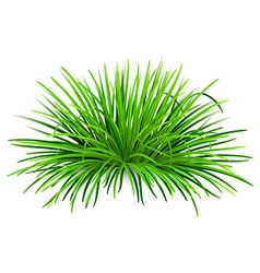 Bunch of green grass vector image vector image