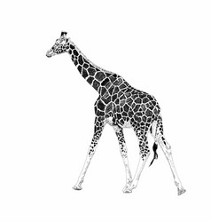 cute giraffe on a white background african safari vector image