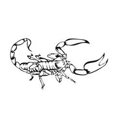 sketch design scorpion vector image