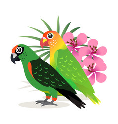 two beautiful colorful parrots lovebird with pink vector image