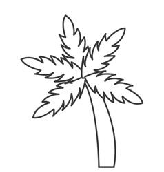 palm tree icon vector image