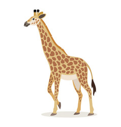 african animal cute giraffe icon isolated on vector image
