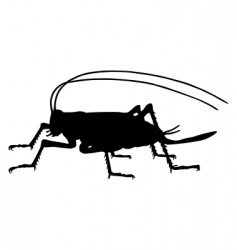 cricket silhouette vector image