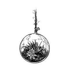 Planted houseplants in suspension glass ball set vector