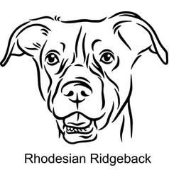 rhodesian ridgeback portrait dog in line style vector image