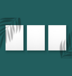 shadow overlay effect blurred palm leaves vector image